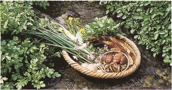 地元のお米・旬の山菜・野菜を使っています